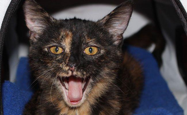 Katze Pepper war hunderte Kilometer weit gereist