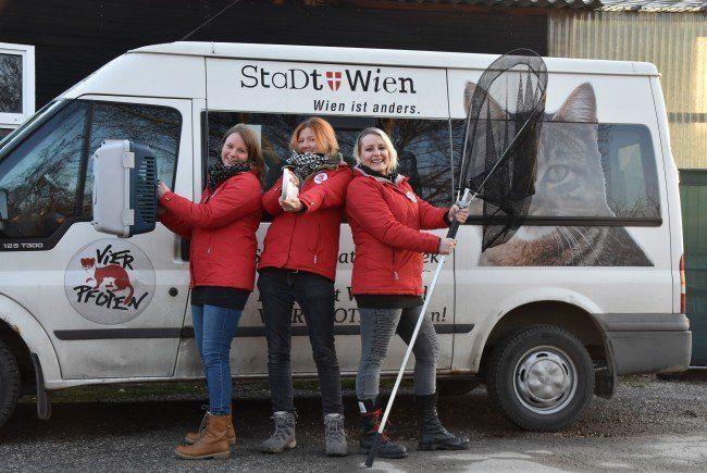 Diese drei Damen haben sich in den vergangenen Jahren um Wiens streunende Katzen gekümmert