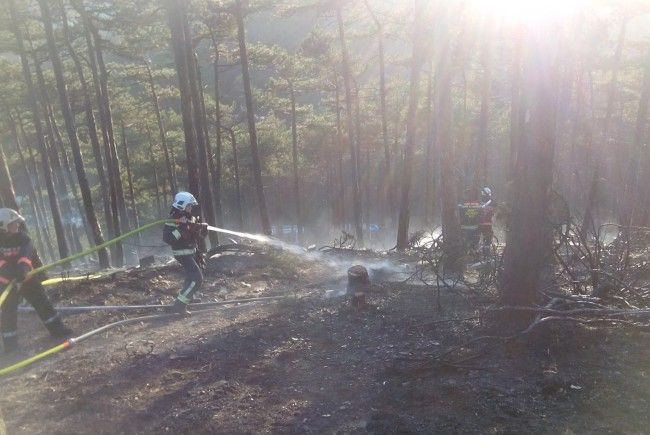 Der Einsatz beim Waldbrand
