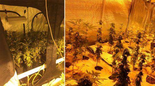 Waffen, Drogen und Cannabis-Aufzuchtanlagen in Wien entdeckt