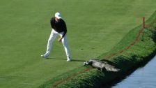 Golfer schickt Alligator zurück in den Fluss