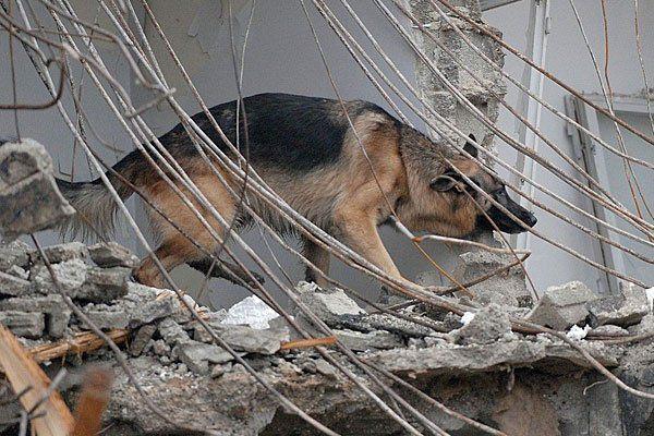 Rettungshunde sollen Kindern die Angst vor Hunden nehmen