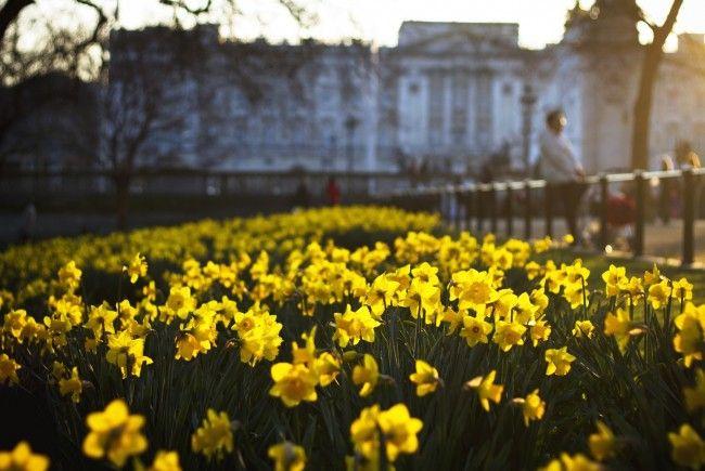 Der Frühling zeigt sich in dieser Woche