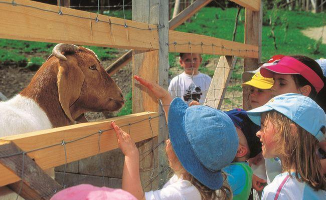 Am Landgut Wien Cobenzl, dem Kinderbauernhof der Stadt Wien, gibt es viel zu entdecken.