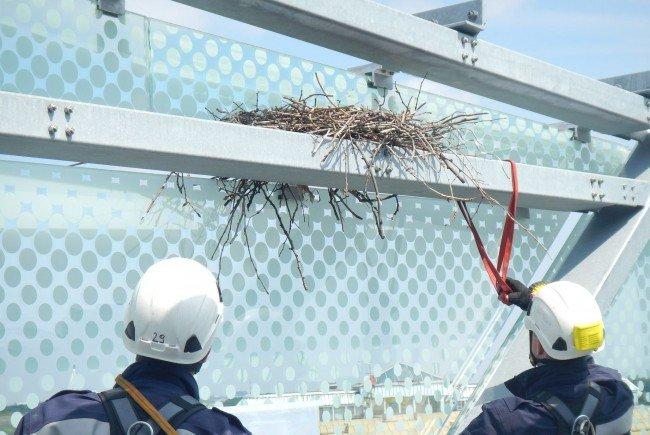 Das Nest inkl. Tieren wird jetzt von der Tierrettung betreut.