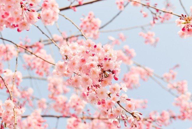 Die Frühjahrsmesse Graz – für jedes Alter alles