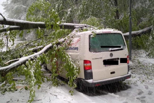 Baum auf Auto gestürzt: Lenker wurde leicht verletzt.