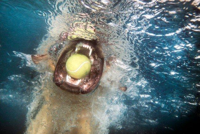 Yvonne Rueffs Hund Mia übt bereits für die PRO PLAN Dog Diving Trophy 2017