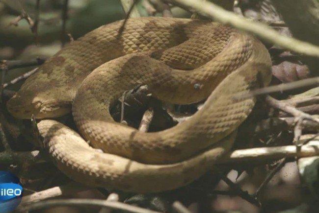 Nur wenige Menschen trauen sich auf die Schlangeninsel.