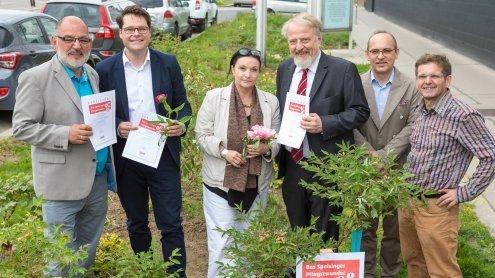 Pfingstrosen vor der VHS Hietzing für karitativen Zweck gepflanzt