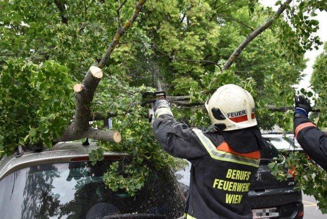 Die Feuerwehr rückte zu zahlreichen Sturm-Einsätzen aus