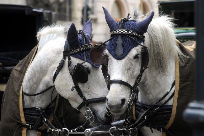 Die Pferde scheuten bei einem Wendeversuch und es kam zum Unfall