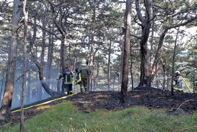 Einsatz bei einem Waldbrand bei Grillenberg im Bezirk Baden.