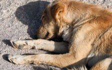 Erneute Giftköder-Attacke auf Hunde