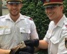Polizisten retten flugunfähigen Falken in Wien-Alsergrund