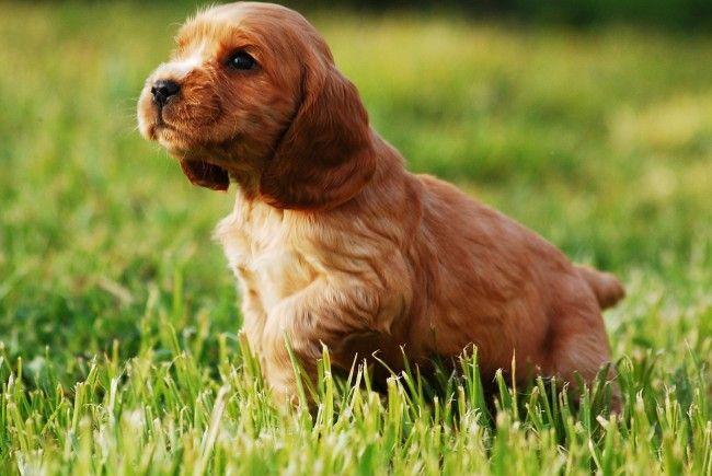 Das neue Tierschutzgesetz sorgt beim Wiener Tierschutzverein für Unmut.