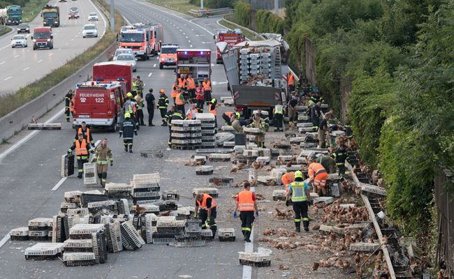 Lkw-Unfall: 5.000 Hühner auf der A1