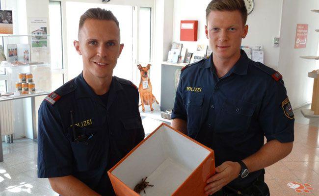 Die beiden Polizisten mit der gefundenen Vogelspinne