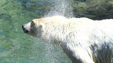Am 25. August gratis in den Zoo Schönbrunn