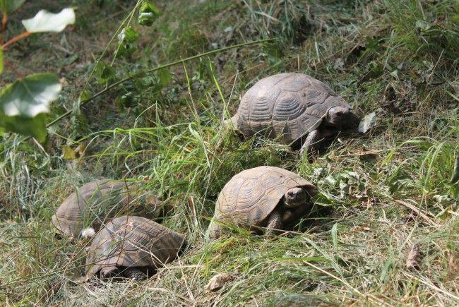 Die Schildkröten werden nun vom WTV versorgt