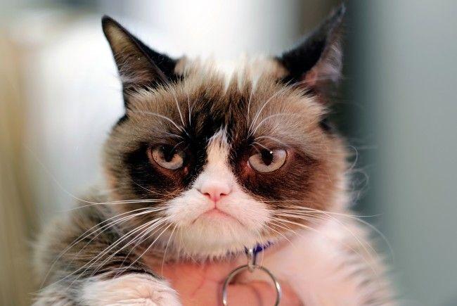 Grumpy Cat war gestern - hier kommt Grumpy Baby.