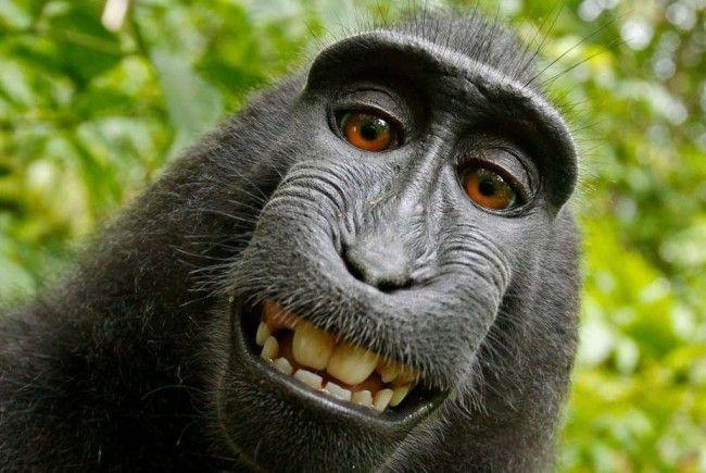 Dieses Selfie ging 2011 um die Welt.