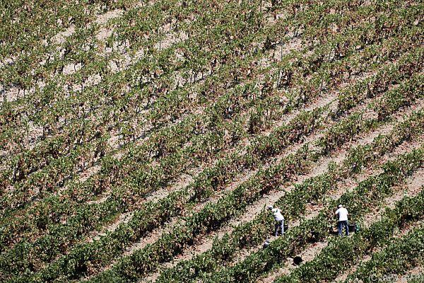 Auch die Landwirtschaft ist massiv betroffen