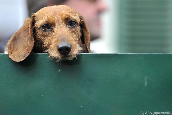 Geschätzt 750.000 Hunde leben in Österreich