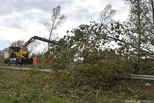 Wieder gab es ein Opfer wegen eines umgestürzten Baumes