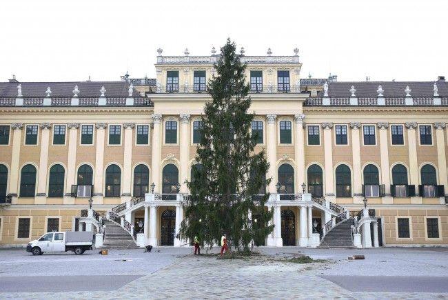 Vor dem Schloss Schönbrunn steht bereits der Weihnachtsbaum.