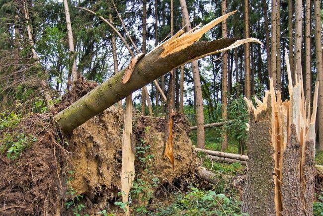 Ein Wiener kam bei einem Forstunfall ums Leben