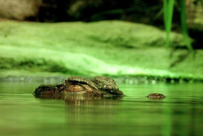 Wurde die Australierin von einem Krokodil getötet?