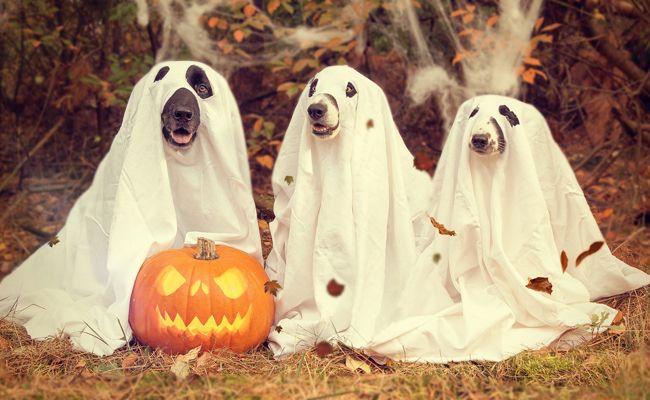Am 31. Oktober wird Halloween gefeiert.
