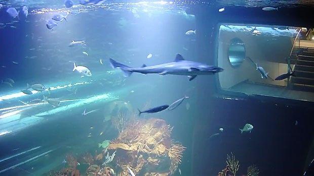Videos aus den Aquarien werden live übertragen.