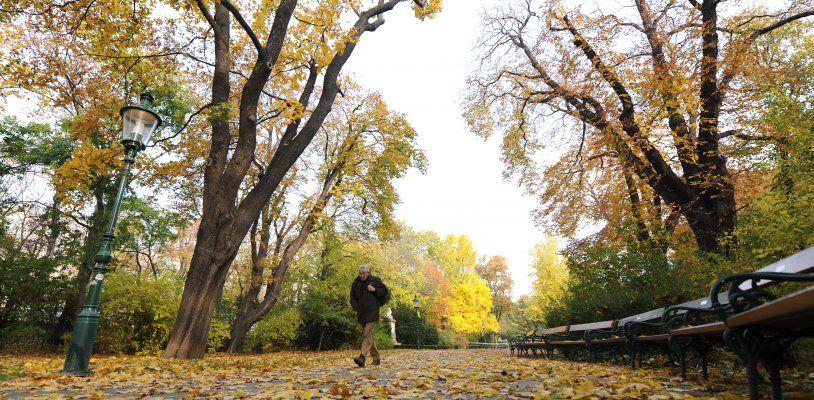 Letzte goldene Herbsttage am Freitag und am Samstag, am Sonntag windig und kühl