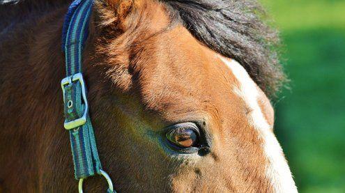 Springreiter soll Pferde in der Wiener Freudenau gequält haben