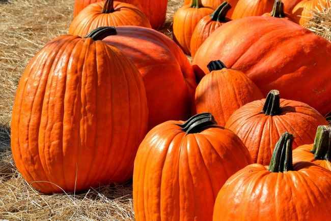 """Der """"Pumpkin Spice""""-Lufterfrischer führte zur Schul-Evakuierung."""