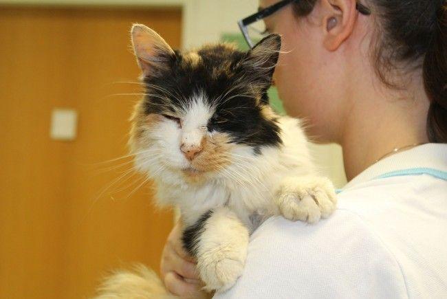 Die schwerkranke Katze wurde am Gelände des Wiener Tierschutzvereins ausgesetzt.