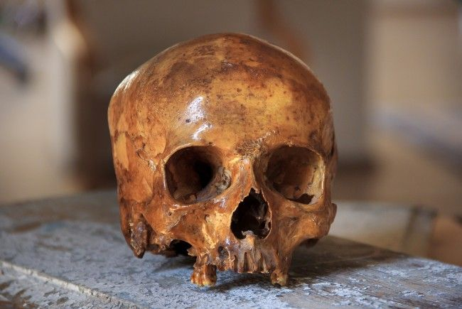 Im Dorotheum werden nun doch keine menschlichen Schädel versteigert.