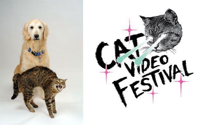 """Das Cat Video Festival findet im Rahmen der """"Hund & Katz""""-Sonderausstellung im NHM Wien statt"""