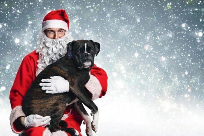 Es ist wieder soweit: Der Hunde-Weihnachtsmarkt lädt ein