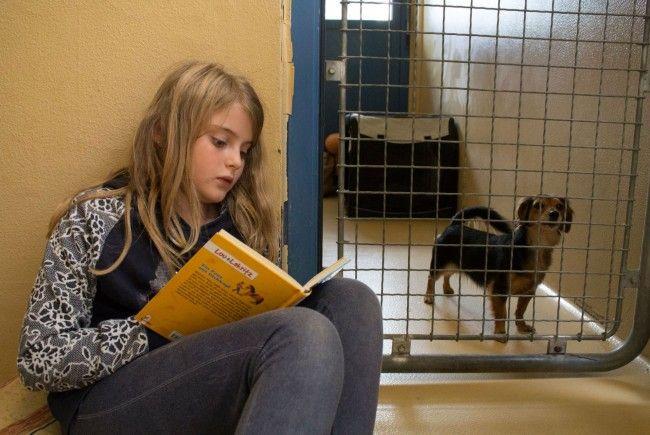 """Wenn """"Bello"""" auf Harry Potter steht: Kinder lesen Hunden vor"""