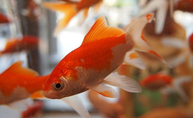 Ein Aquarium kann die Geschwindigkeit des WLANs beeinflussen.