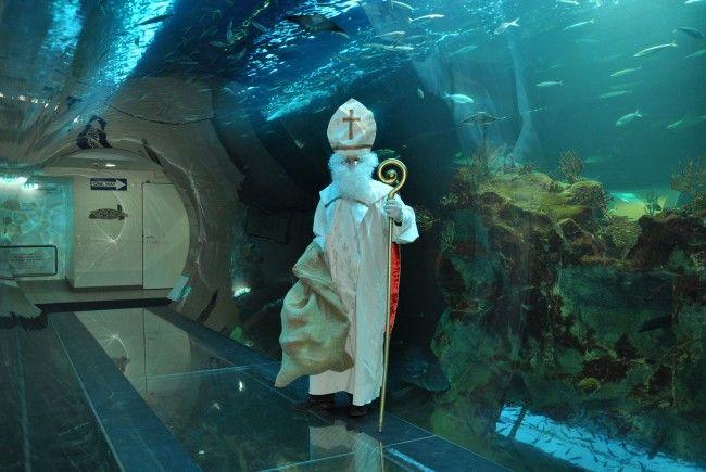 Der Nikolo stattet dem Haus des Meeres einen Besuch ab