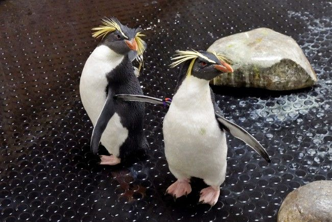 Howie und Rocky leben jetzt im Tiergarten Schönbrunn
