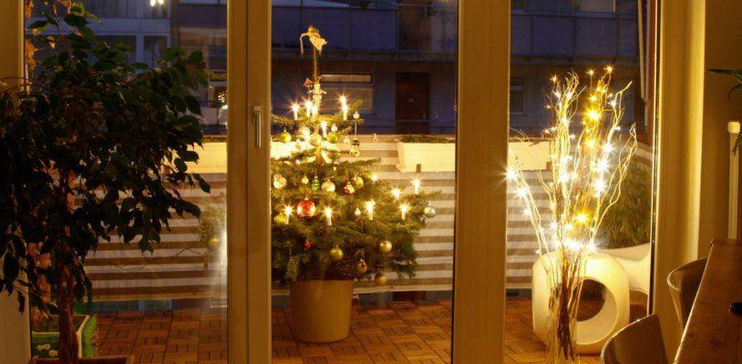 Lebende Alternative: Der Christbaum im Topf grünt nicht nur zur Weihnachtszeit