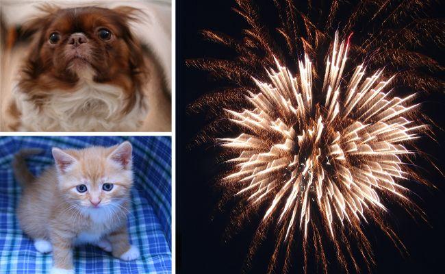 Für Hund und Katze ist Silvester oft mit Stress und Angst verbunden