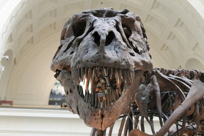 Kann mit dem Blut ein Dinosaurier gezüchtet werden?