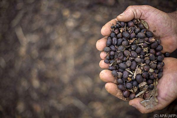 Umstieg auf Fair Trade bewahrt vor dem Ruin