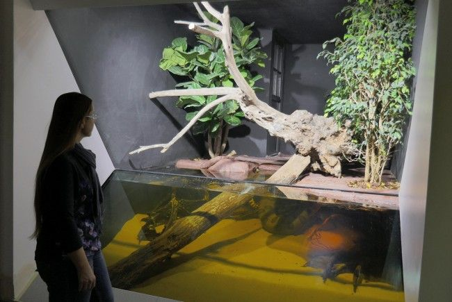 Beeindruckend: Die Anakondas im Haus des Meeres in Wien
